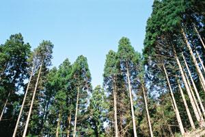 豊かな森を未来に伝える